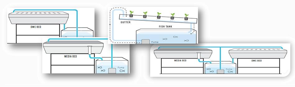 Aquaponics Systems test